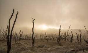 alberi morti