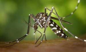 zanzara foto modificato 1